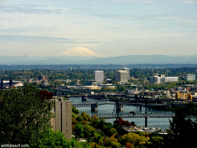 View of Portland from Arial Tram | WildTalesof.com