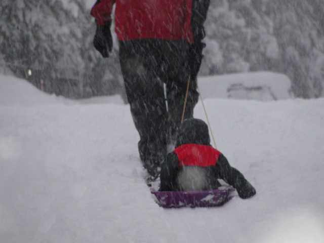 Sledding: A fun way to get Bergen from Point A to Point B.
