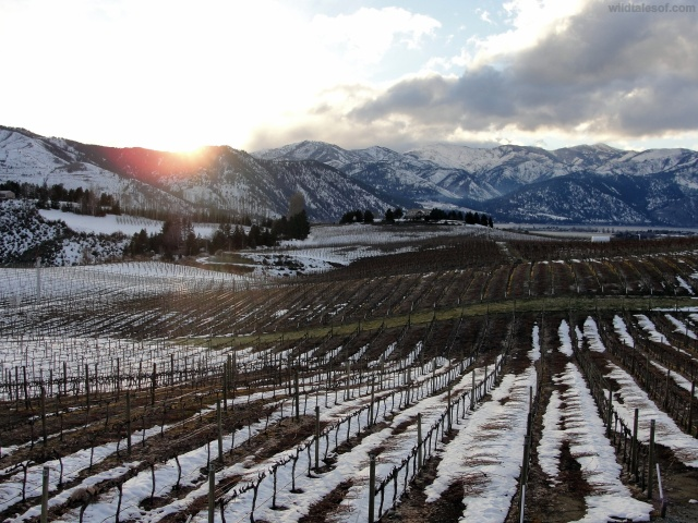 View Benson Winery Lake Chelan