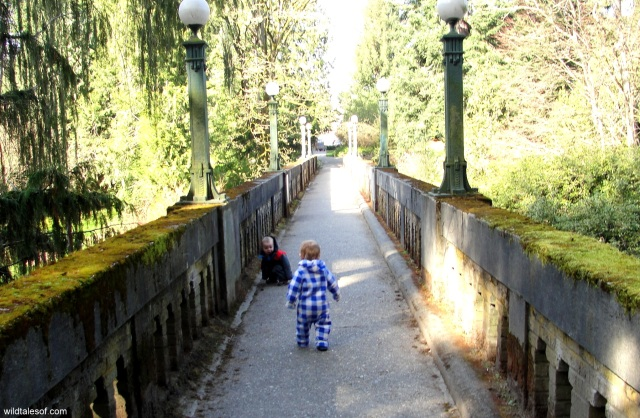 Washington Park Arboretum Bridge