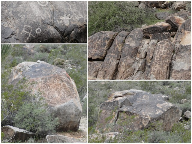 Petroglyphs White Tank Mountains Arizona