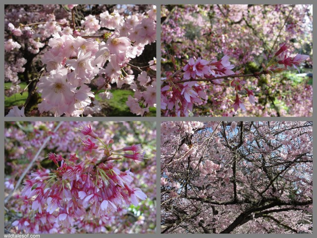 Flowers Washington Park Arboretum