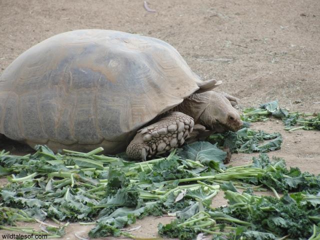 Tortoise Wildlife Zoo and Aquarium: WildTalesof.com