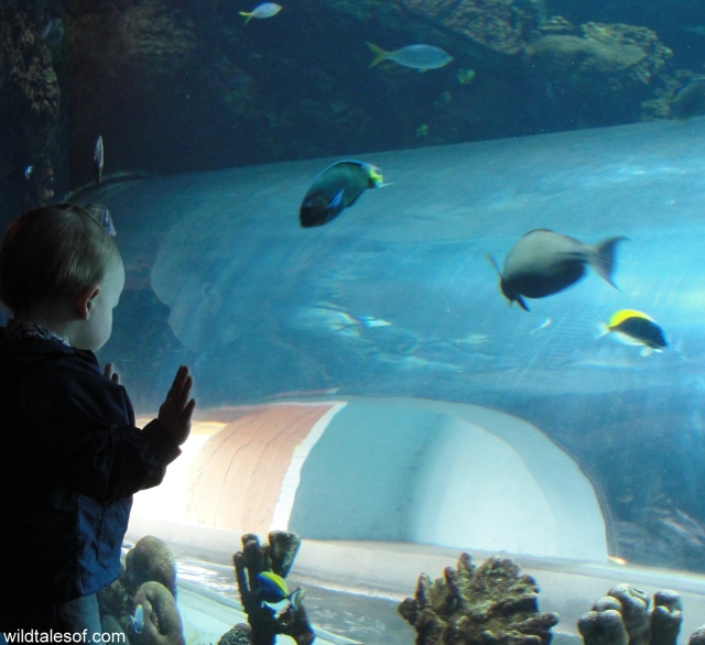 Wildlife World Zoo and Aquarium: WildTalesof.com