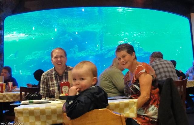 Dillon's Shark Tank Wildlife World Zoo and Aquarium: WildTalesof.com