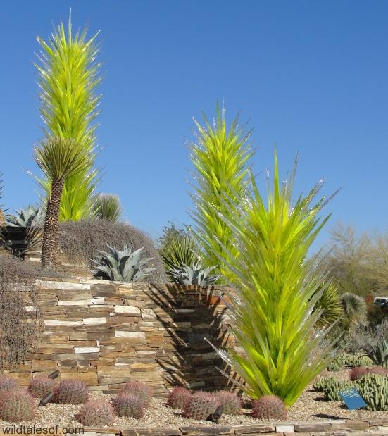 Chihuly: Desert Botanical Gardens--wildtalesof.com