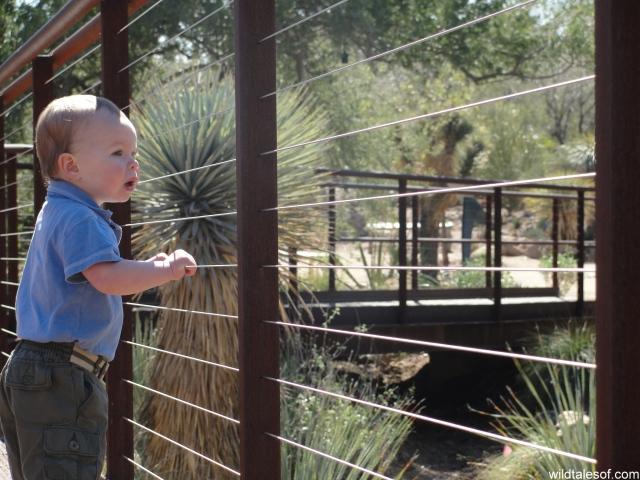 Agave Yucca Forest: Desert Botanical Garden--www.wildtalesof.com