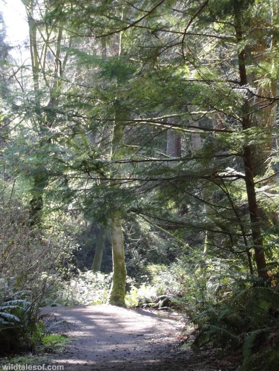 Schmitz Preserve Park