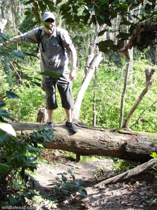 Hiking over fallen tree Schmitz Preserve Park