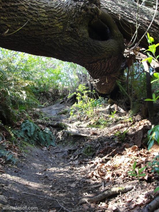 Fallen Trees Schmitz Preserve Park