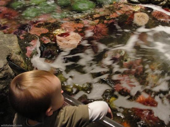 Touch Tanks Seattle Aquarium