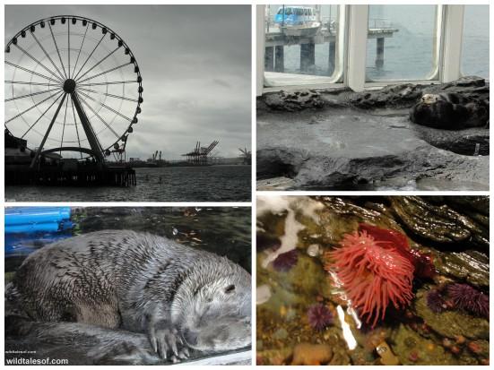 Seattle Aquarium: Sea Otter, Touch Tank, Big Wheel