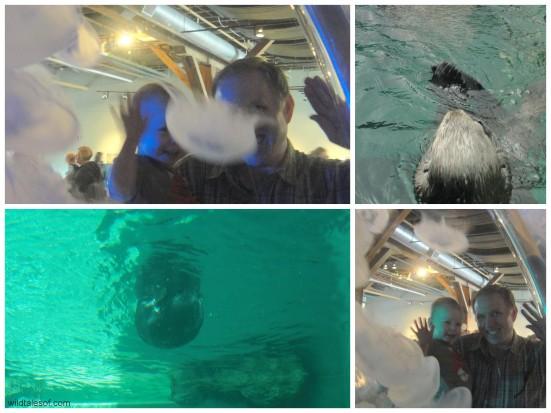 Seattle Aquarium Sea Otters + Jellyfish