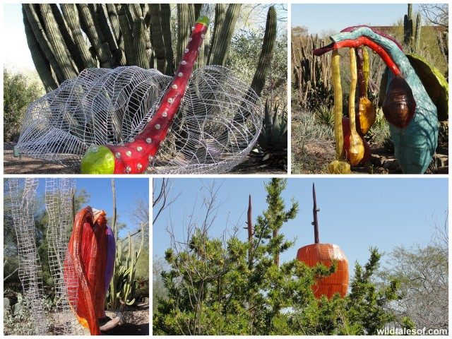 Carolina Escobar: Desert Botanical Garden--wildtalesof.com
