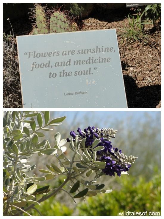 Flowers of Desert Botanical Garden: www.wildtalesof.com