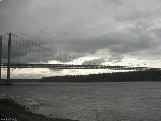 View of Tacoma Narrows Bridge: Amtrak Cascades | WildTalesof.com
