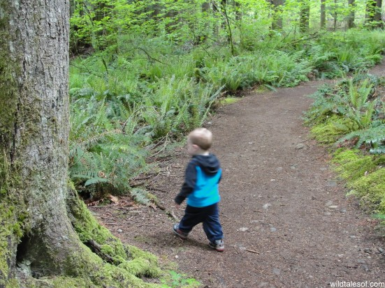 Toddler on the Trail: Twin Falls, Olallie State Park | WildTalesof.com
