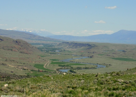 Paradise Valley view: Hubbard's Yellowstone Lodge | WildTalesof.com