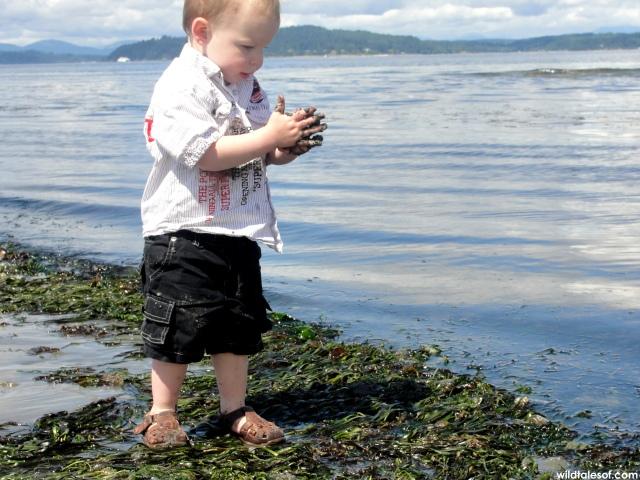 Summer Solstice on Alki Beach | WildTalesof.com