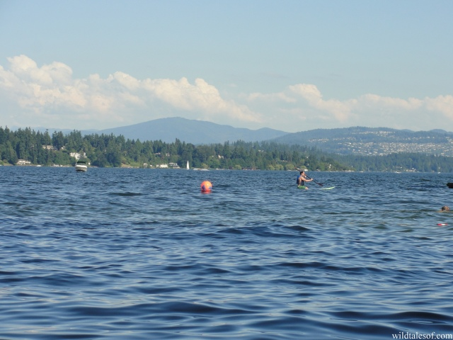 Beach Play in Seattle's Madison Park on Lake Washington | WildTalesof.com