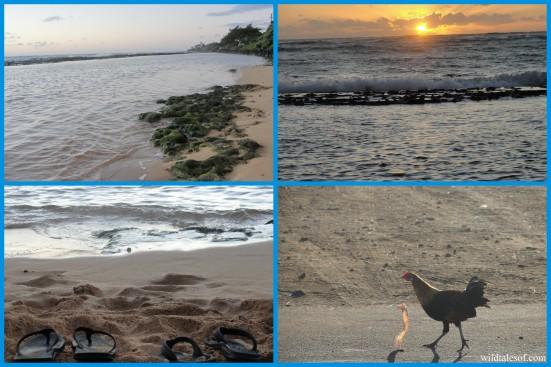 Sunrise Moanakai Beach Cottage: Kapa'a, Kauai | WildTalesof.com