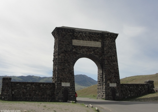 North Entrance: Yellowstone National Park | WildTalesof.com
