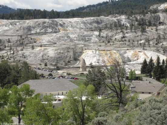 Mammoth Hot Springs Area: Yellowstone National Park