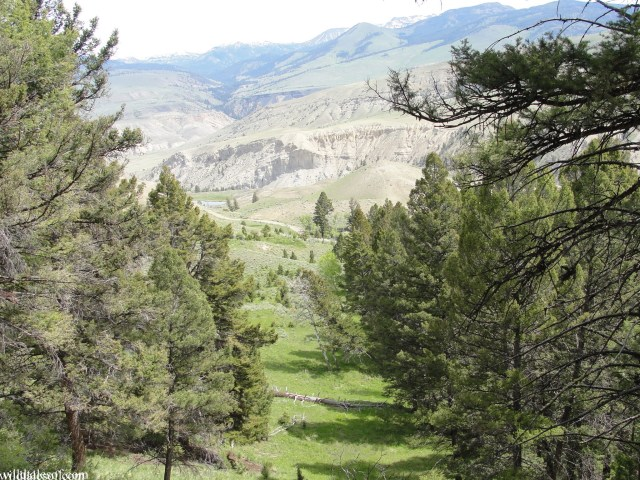 Beaver Ponds Loop Trail: Yellowstone National Park | WildTalesof.com