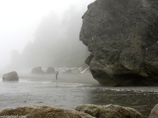 Ruby Beach: Olympic National Park | WildTalesof.com