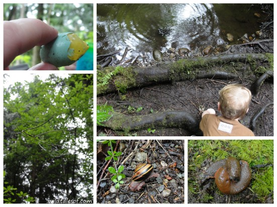 Hiking with a Toddler: Issaquah, WA's Swamp Monster Trail | WildTalesof.com