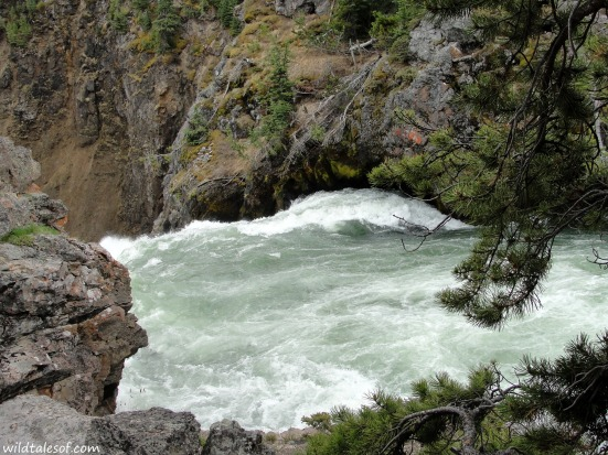 Upper Falls: Grand Canyon of Yellowstone | WildTalesof.com