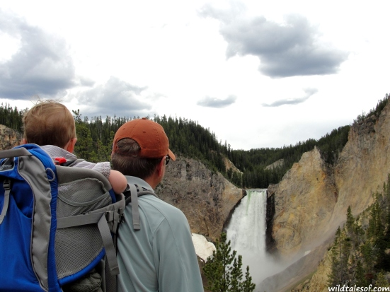 Lower Falls: Yellowstone National Park | WildTalesof.com
