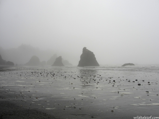 Olympic National Park's Ruby Beach | WildTalesof.com