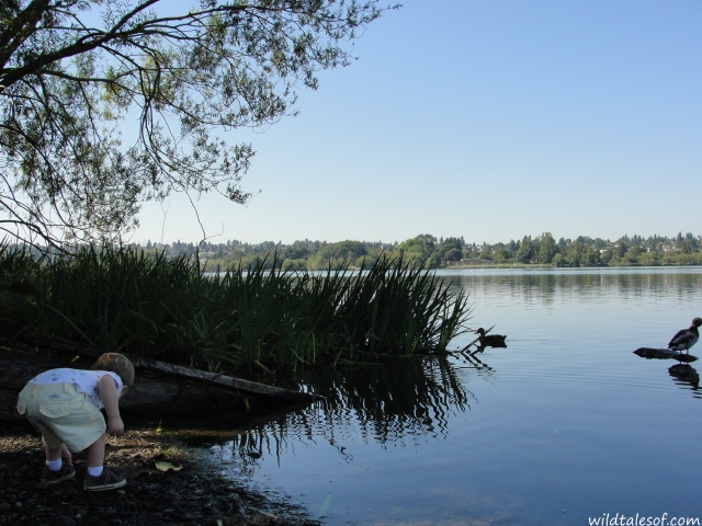 Seattle Area Adventure: Play and Eat (and Save!) in Green Lake | WildTalesof.com