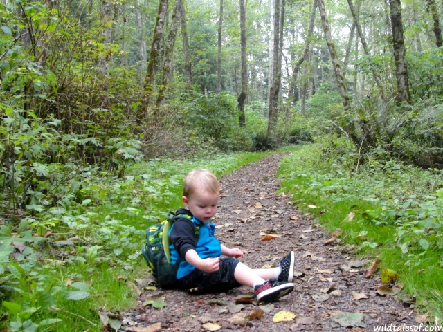 Hiking with a Toddler: Bellevue, WA's Anti-Aircraft Peak | WildTalesof.com