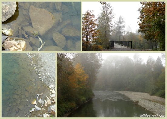 Experiencing Fall on the Snoqualmie Valley Trail in Carnation, WA | WildTalesof.com