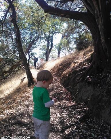 Henry W. Coe State Park: Near San Jose, California | WildTalesof.com