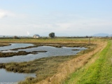 Wanna Be Birdwatchers on Skagit Valley, WA's Padilla Bay Shore Trail
