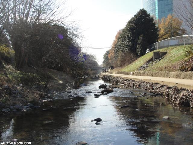 Urban Hiking in Charlotte, North Carolina: Little Sugar Creek Greenway | WildTalesof.com