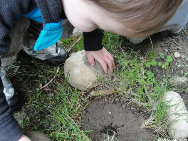 Easy Backyard Game-What's Under the Rock?   WildTalesof.com