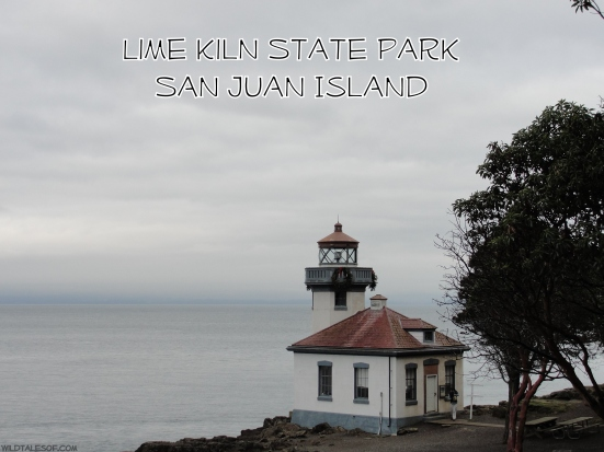 Lime Kiln State Park: San Juan Island, WA | WildTalesof.com