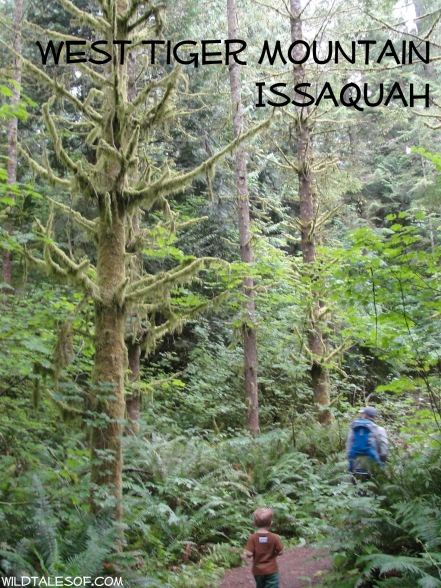 West Tiger Mountain (Swamp Monster Trail): Issaquah, WA | WildTalesof.com