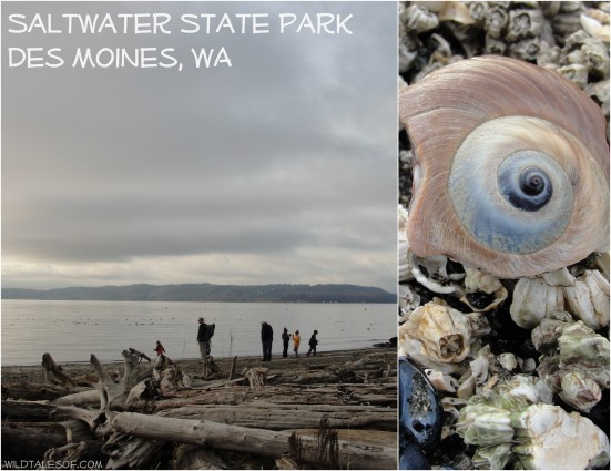 Saltwater State Park: Des Moines, WA | WildTalesof.com