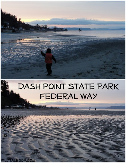 Dash Point State Park: Federal Way, WA | WildTalesof.com