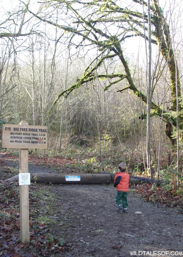 Built-in Adventures: Cougar Mountain's Big Tree Ridge Trail