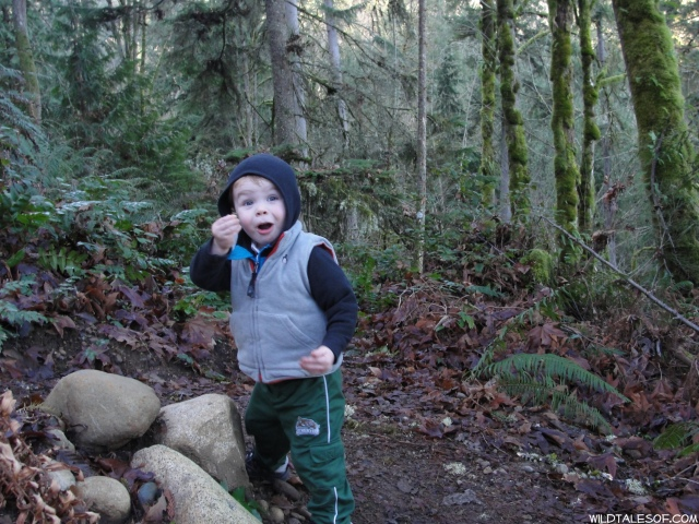 Built-in Adventures: Cougar Mountain's Big Tree Ridge Trail