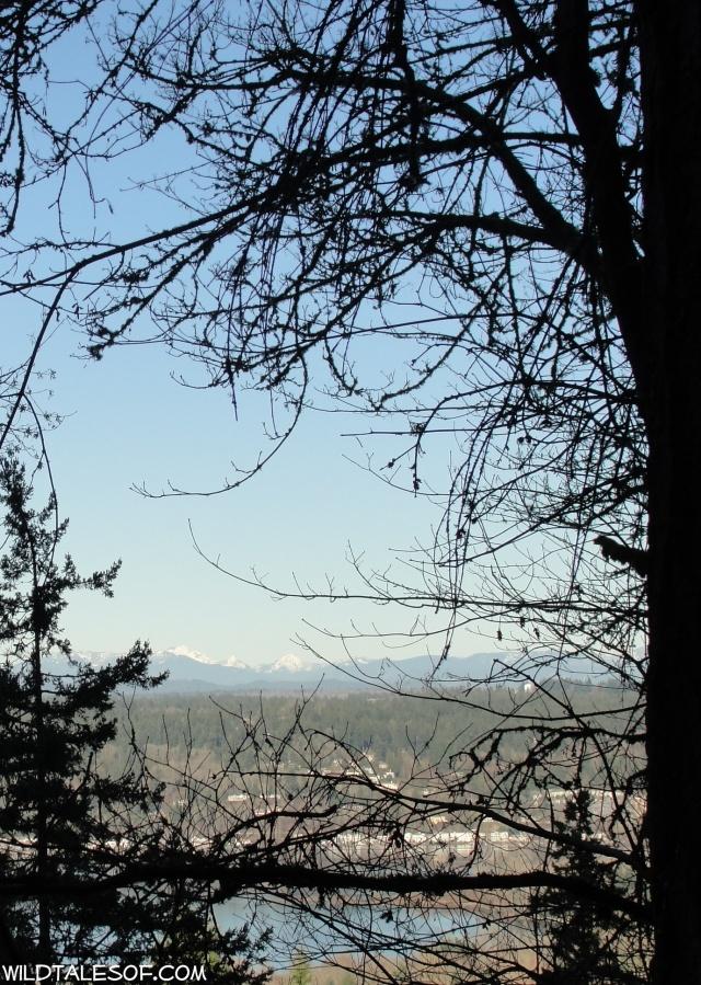 Built-in Adventures: Cougar Mountain's Big Tree Ridge Trail | WildTalesof.com