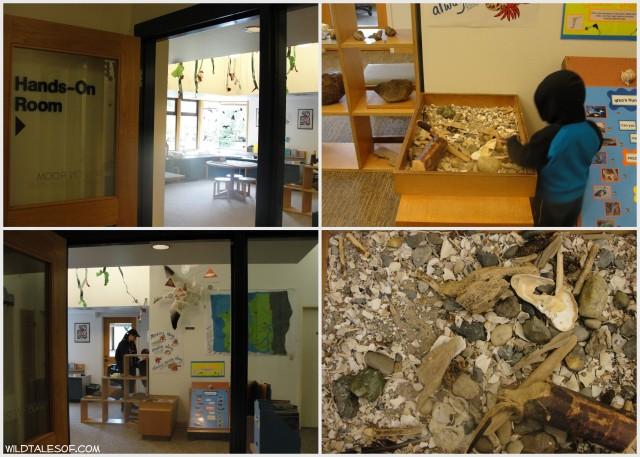 Western Washington Respites: Padilla Bay's Breazeale Interpretive Center | WildTalesof.com