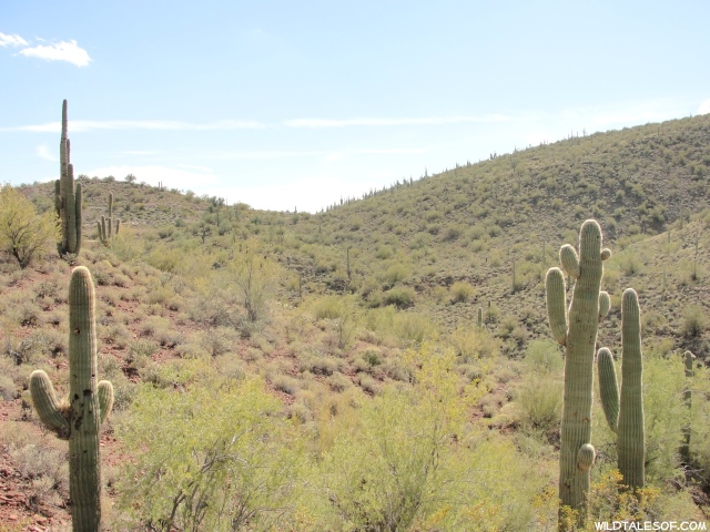 Hiking Lake Pleasant Regional Park: Typical Arizona with a Few Surprises