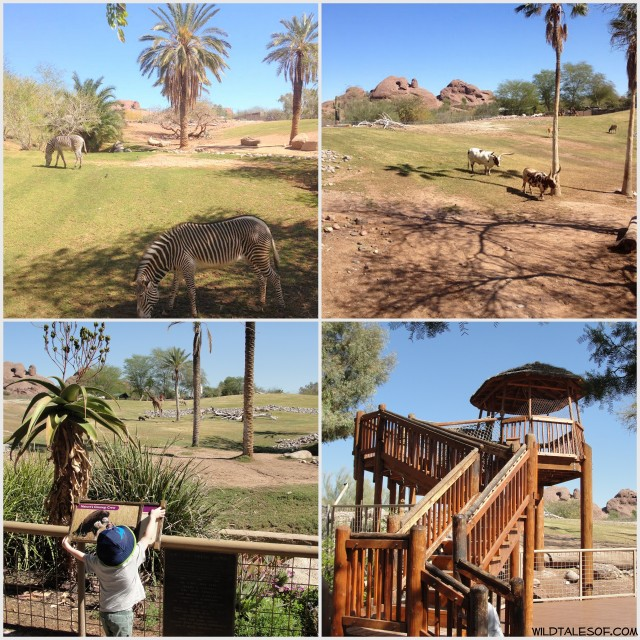 Wild Fun at the Phoenix Zoo: 5 Highlights for Families | WildTalesof.com